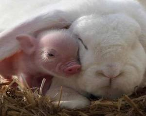 pig and bunny