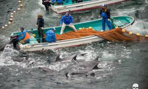 Photo courtesy of Sea Shepherd Conservation Society