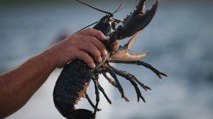 Dublin-lobsters