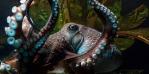 scczen_octopus_620x310