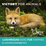 Luxembourg-fur-free-570×570